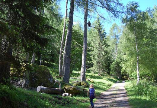 I sentieri dei boschi della Val di Rabbi