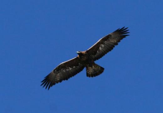 Gli uccelli del Parco Nazionale dello stelvio