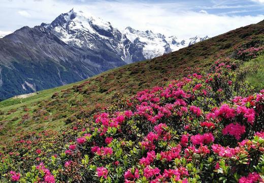 La flora del Parco dello Stelvio