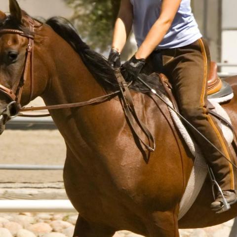 Equitazione Malga Pellizzano