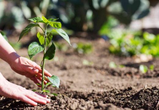 La coltivazione naturale